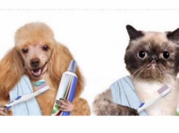 Campaña salud e higiene bucodental